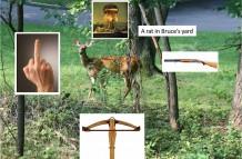 Evil Deer, Lyme Disease, Canon XTI