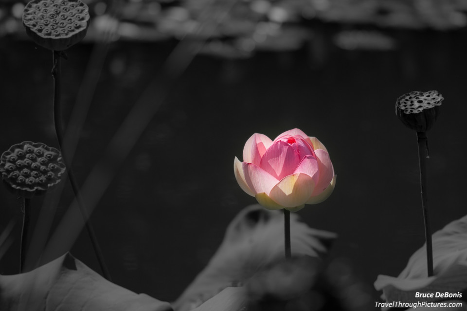 Flower Photography And Color Splash How To Do It
