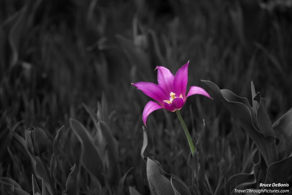 Flowers And Color Splash Photo Illusion