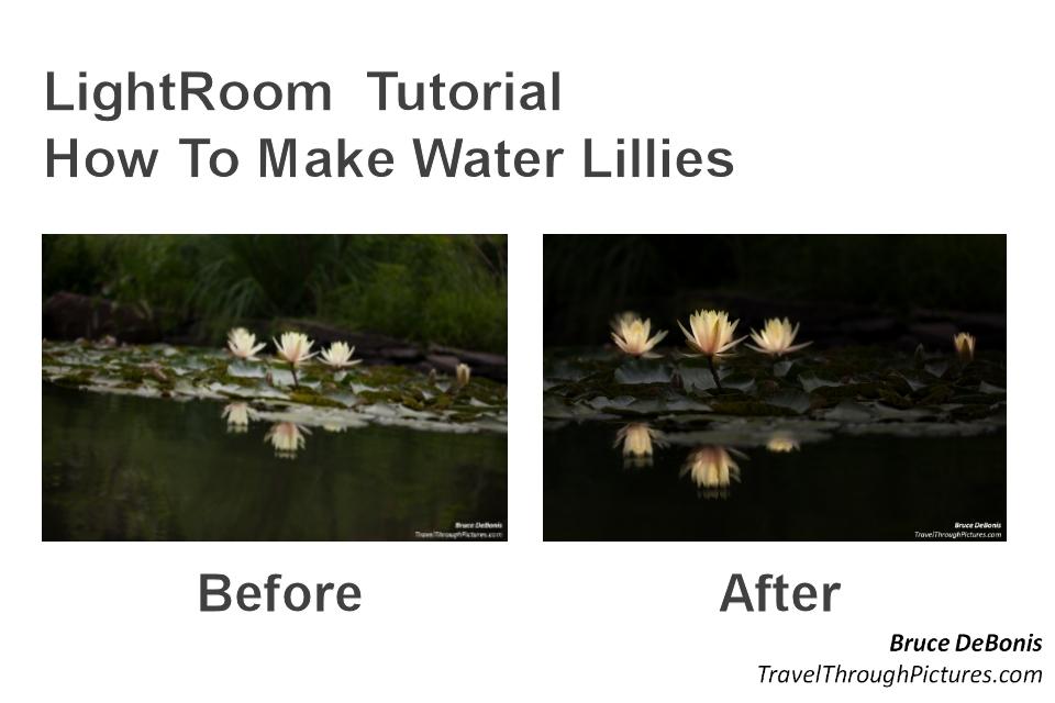 LilliesBeforeAfter