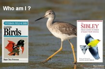 Best Bird Field Guides